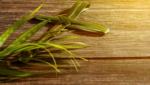 Palm Sunday: Our Hope Is For Nothing Less Than Life Itself
