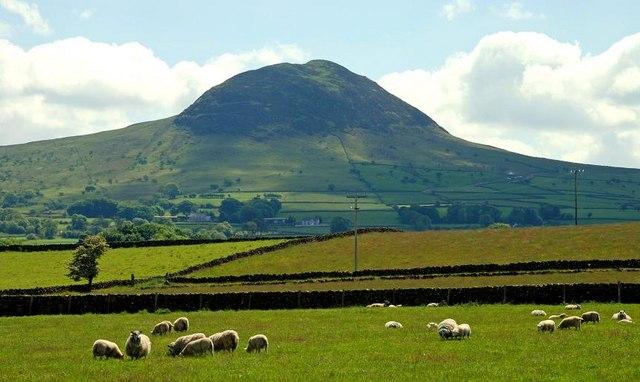 Slemish Antrim Ireland Sheep Saint Patrick